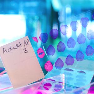 human tissue biobank slide samples